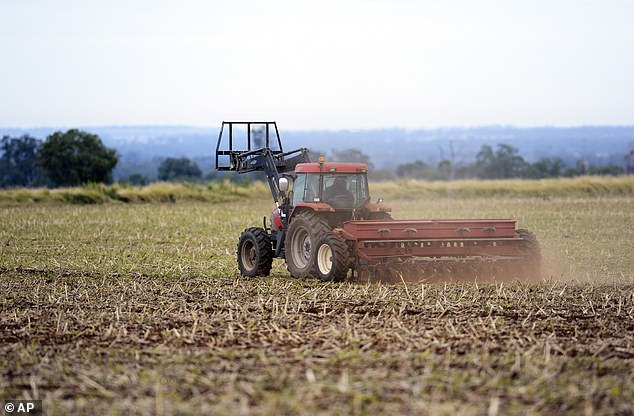 Following the economic threats Chinese Ambassador Cheng Jingye, Australia's barley industry was hit with crippling tariffs (pictured, a farmer sows barley at his property on the Darling Downs in Queensland)