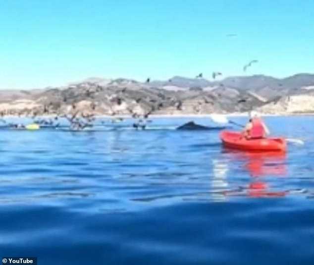 Footage taken by another whale watcher shows the mammal scoop up the boat and the two friends