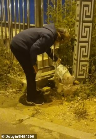 The trending video from China shows the Good Samaritan checking if the cloth would fit the cat