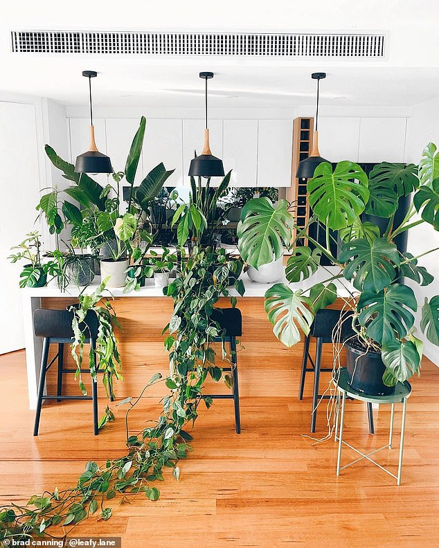 The graphic designer has transformed his townhouse into a lush green 'forest' after years of filling his space with potted and hanging plants of all shapes and sizes