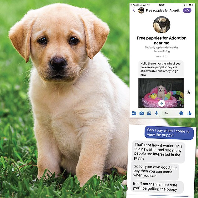 Adorable: But crooks are using Facebook, top right, to lure in would-be dog owners. Above right, posts from crooks on Messenger
