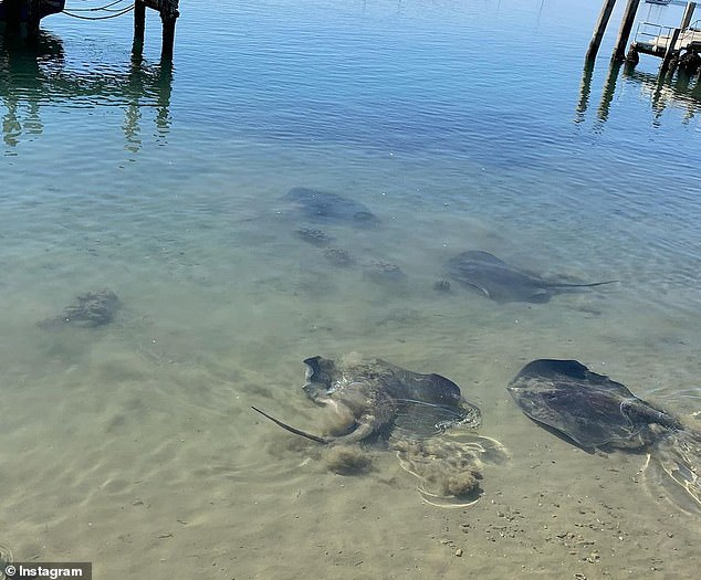Wildlife including these beautiful stingrays frequent the area - other native friends include seagulls and pelicans
