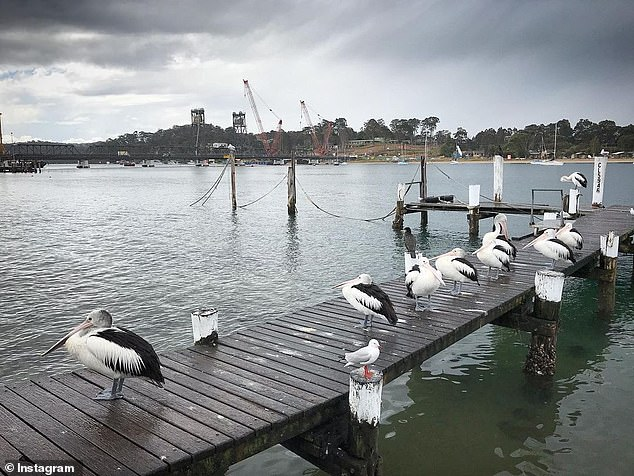 The bay is home to a lot of fishing industry - as well as these friendly birds