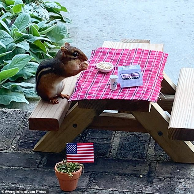 The high life:Angela English Hansberger, 50, from Tucker, Georgia, has created a tiny restaurant for the chipmunk that visits her front porch during lockdown