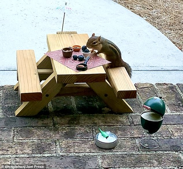 New look: Angela changes up the chipmunks 'restaurant' using miniature rugs, grills, and tablecloths