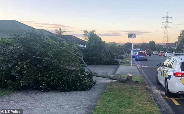 A man has pleaded guilty to causing $40,000 damage after going on a rampage in which he cut down eight large native Christmas trees lining a quiet suburban street (pictured)