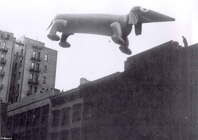Fritz the 25-foot-long dachshund was one of the first balloon animals that appeared alongside Felix the Cat in 1927. He was re-created and filled with helium in 1932 (above) and 1933 before he was retired