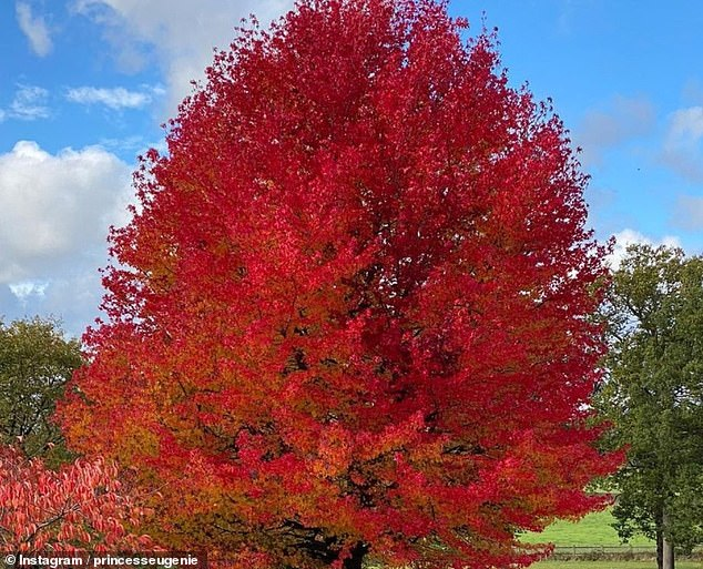 Eugenie said nature was a 'constant' as she shared a picture of a beautiful red tree, perhaps from Windsor, where she now resides with Jack