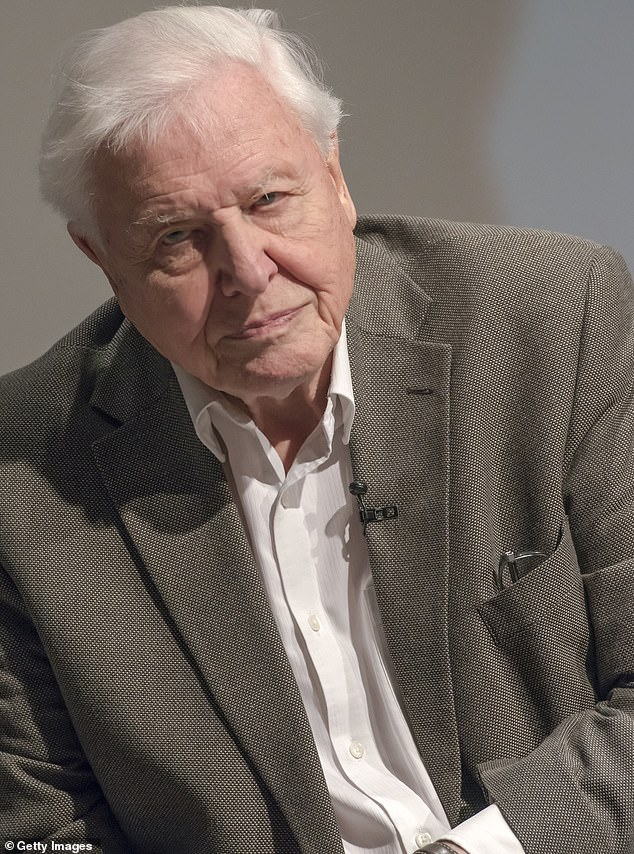 Pals:Beloved television star David Attenborough, 94, is a world famous natural historian known for his documentary series. Ray says the pair became good friends after their interview