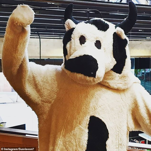 The Cash Cow pops up during Sunrise's daily giveaways, and the person underneath the novelty outfit is usually one of the show's guest greeters