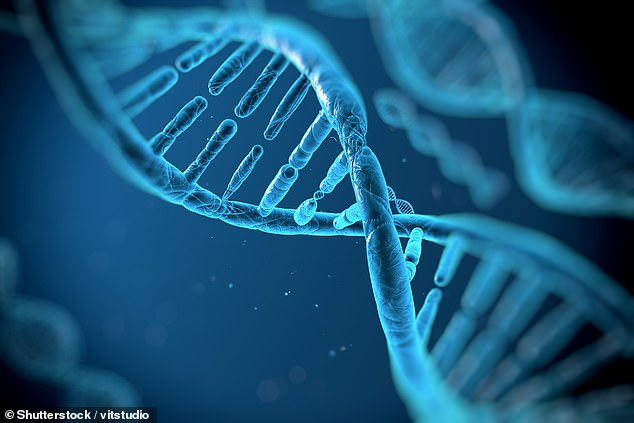 Alice unintentionally uses the malicious DNA along with other sequences, including Cas9. During the cell transformation, Cas9 proteins are combined with gRNA from the malicious sequence to form CRISPR complexes that create multiple double-strand breaks - resulting in a noxious agent