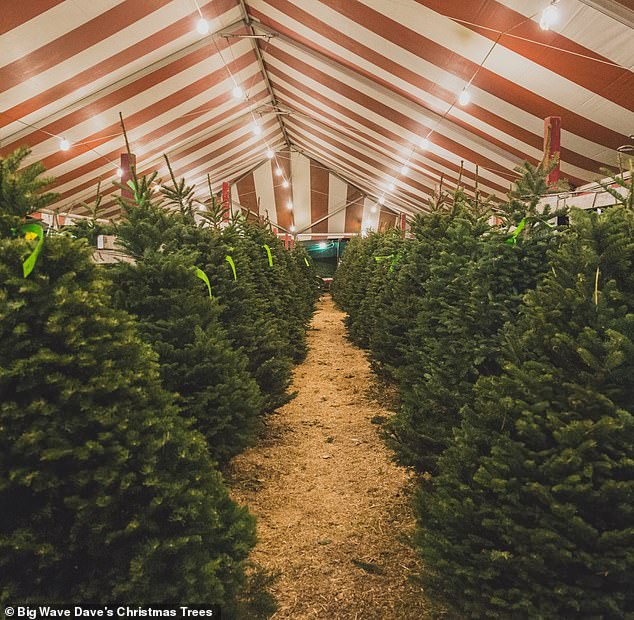 Hilarious: James Almaguer, who said he worked in the tree lot, tweeted that 'the delighted little son from another family ran through the trees to Harry and asked if he was working here ''