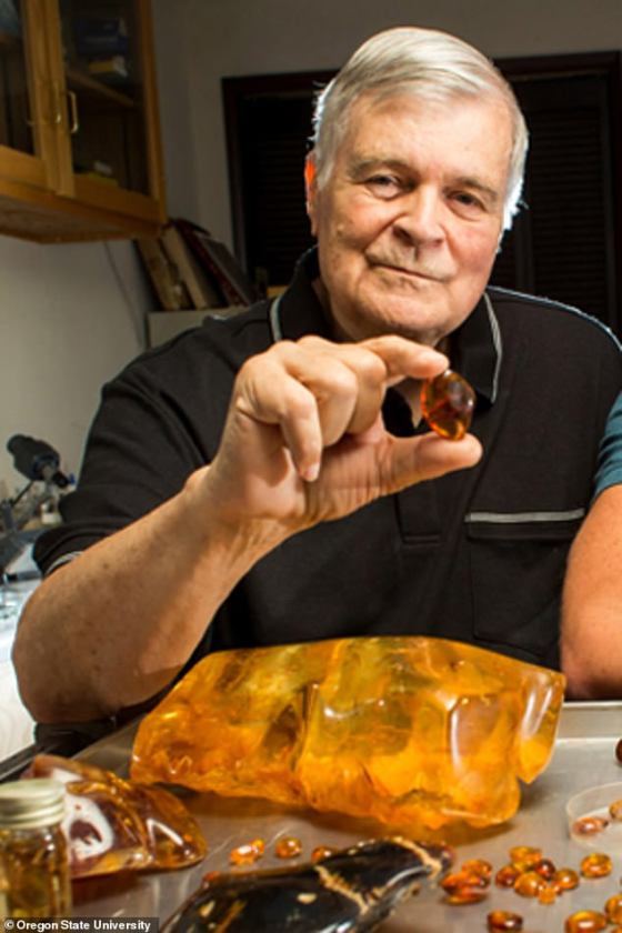 OSU paleontologist George Poinar Jr. picks up a piece of amber.  The work of a world-renowned expert on the analysis of plants and animals found in prehistoric matter inspired Michael Crichton to write Jura Park.