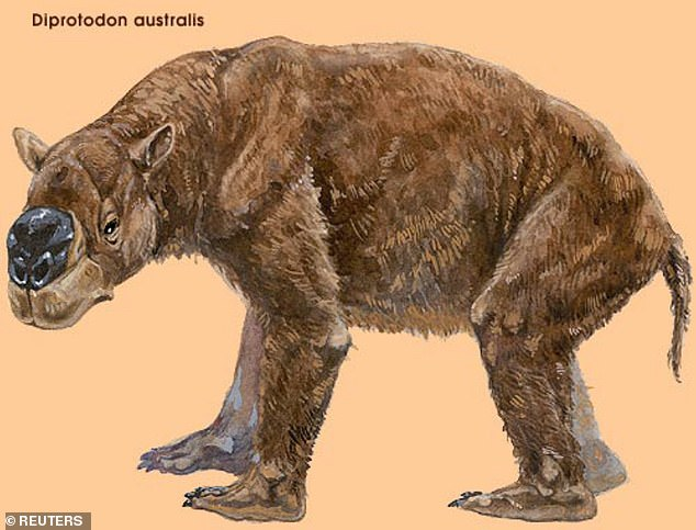 The ancient crocodylian ate giant wombats like this one, now extinct, that once roamed southeast Queensland. They were, for a time, the world's largest ever marsupial