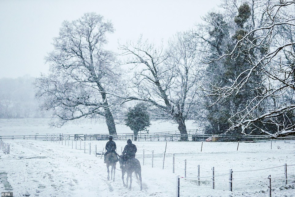 Teh snow continued to fall in parts of England today. Pictured: Horses on the gallops in the snow at Sam Drinkwater's Granary Stables in Upper Strensham, Worcester