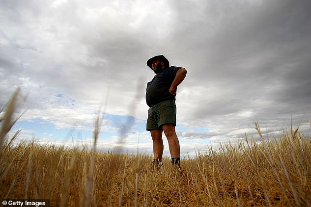 China announced a whopping 80.5% levy on barley exports starting May 19. Pictured is a barley farmer in central west NSW
