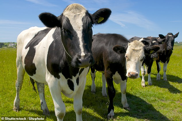 The royal heir says the overuse of chemicals, growth hormones and antibiotics in beef production (library image), as well as an over-reliance on mono-culture cropping systems in agriculture, is damaging the environment