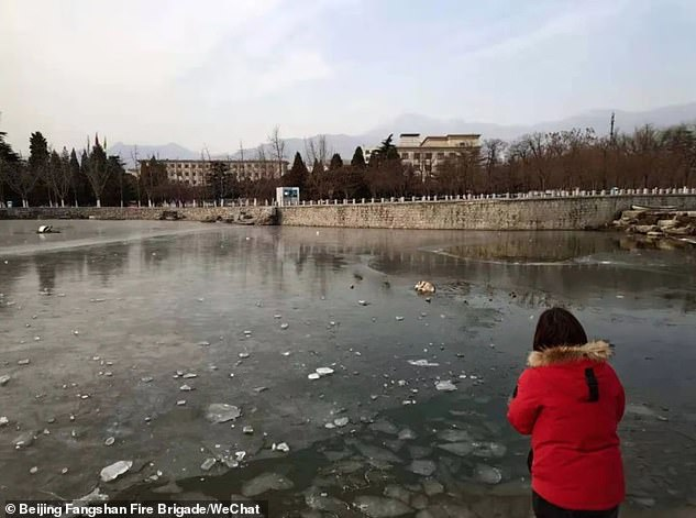 The incident occurred on Saturday morning when the Chinese woman (pictured) was walking her husky at a local park in Beijing, according to the Fangshan Fire Brigade in Beijing