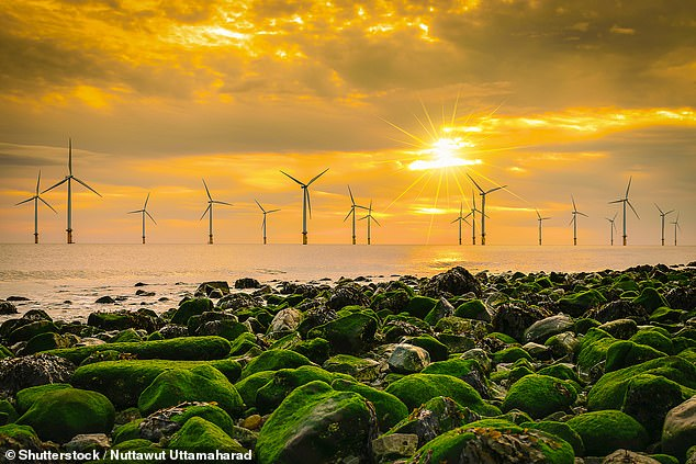 The push for renewable sources of energy and reduced power demands amid COVID-19 has put Britain on track for its 'greenest year on record'. Pictured, an English offshore wind farm