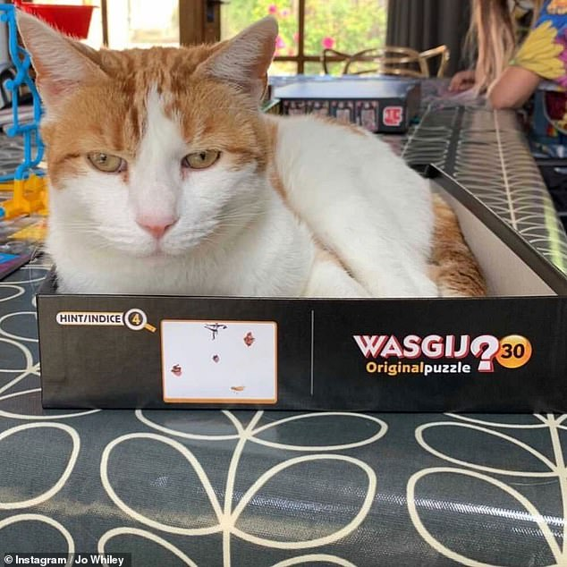 Adorable: Ginger and white feline GinGin passed away in October and the felt model was based on a snap of the cat sitting in a puzzle box (pictured)