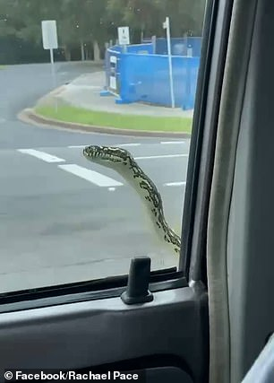 The sneaky hitchhiker pops up at the driver's seat