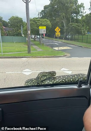 The snake slithered along the driver's seat window