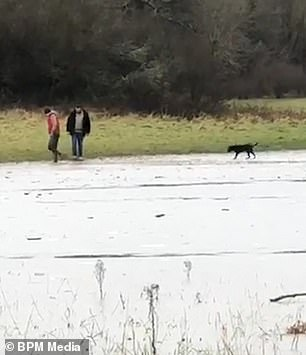 The excited pup was out for a walk in Plymbridge, Plymouth, when it sniffed out a huge, frozen over piece of marshland