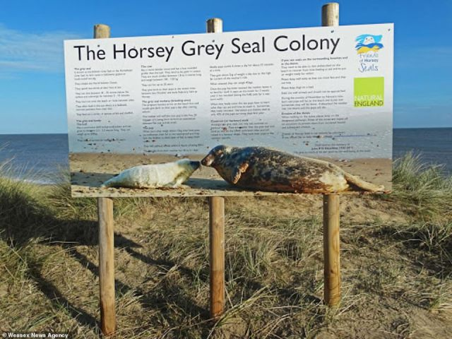 Norfolk Police revealed a couple had travelled 130 miles from their home in Wellingborough in Northamptonshire to Horsey on Thursday to look at a seal colony