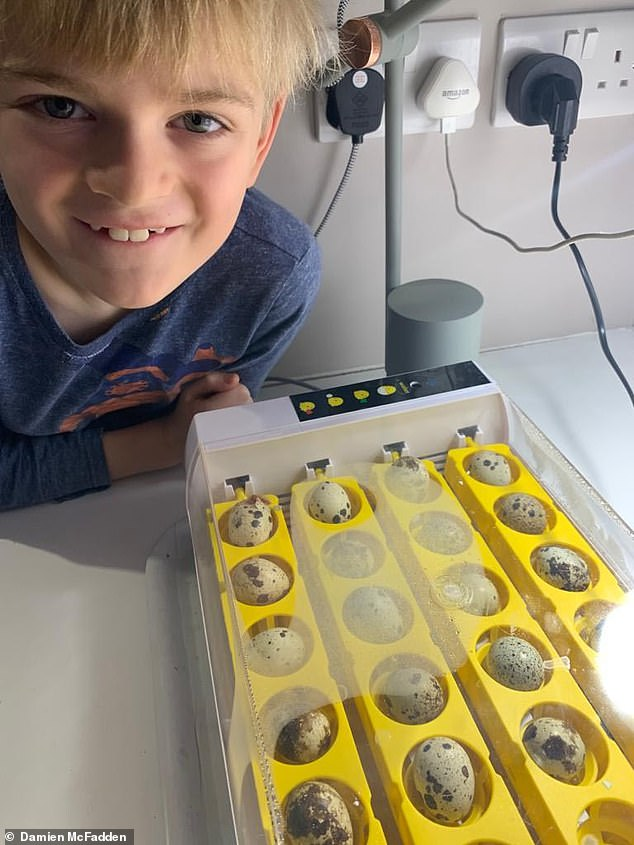 Felix with the 24 quail eggs in the specially designed incubator which keeps them warm, rotates them and provides humidity to stop newly-formed chicks sticking to the inside of shells