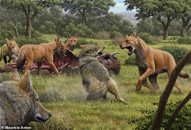 Artists impression of an ancient scene showing two grey wolves (lower left) as they confront a pack of dire wolves over a bison carcass in Southwestern North America 15,000 years ago.