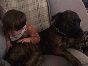 A toddler and a dog from Sidney Street, Cambridge were filmed playing together on a sofa sending the little boy into fits of giggles