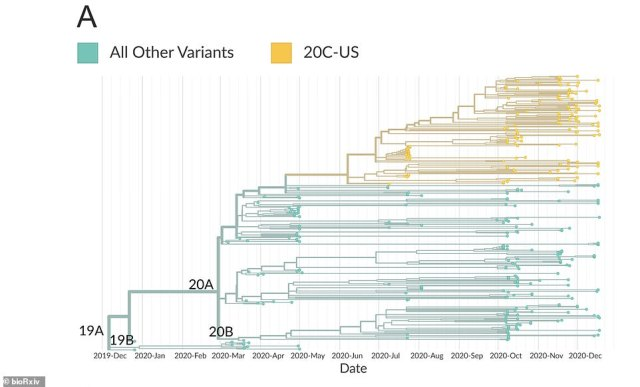 Despite being more widespread, the virus does not appear to more deadly, just more transmissible