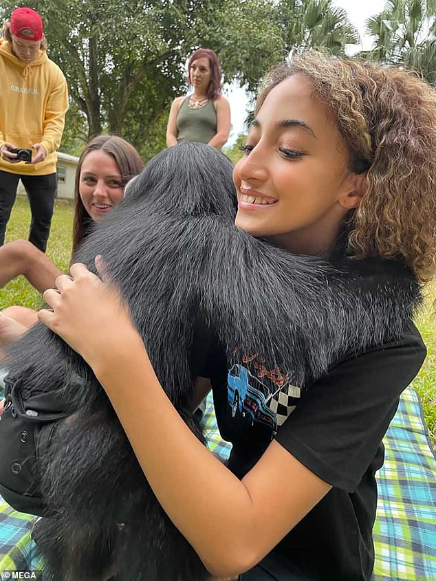 Sweet: She got an affectionate display from one of the diaper-clad chimpanzees as it gave her a hug