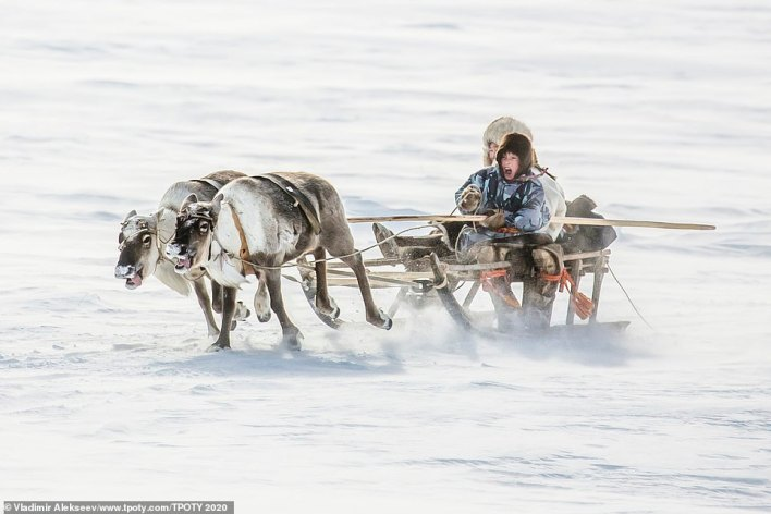 Alekseev took this image in the Yamal Peninsula in Russia. He said: 'For the indigenous people of the far north, deer are wealth. This includes food, housing, clothing, and transportation. And children, from a very young age, know how to drive reindeer on special sleds called narta'