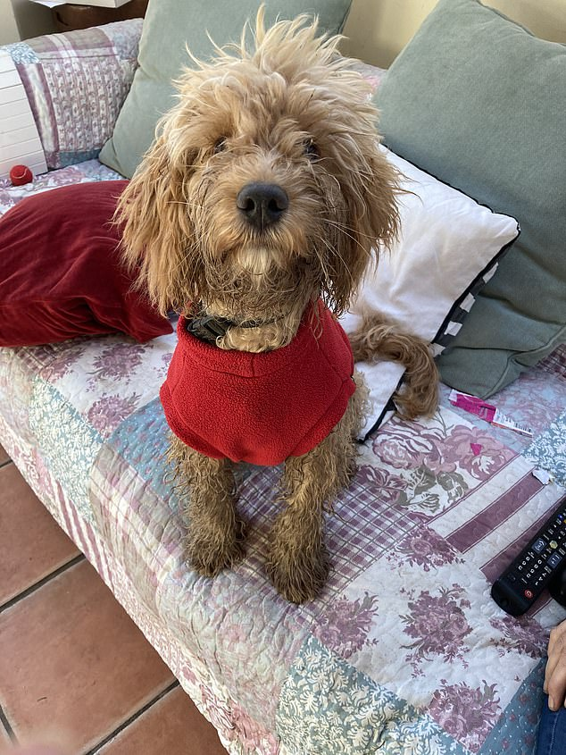 Fudge, a cockapoo, aged eight months, was being taken for a walk, but the excitable youngster skidded down the steep embankment