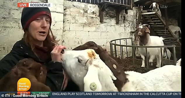 Dot McCarthy, who owns the Cronkshaw Fold Farm and Study Centre in Lancashire, revealed she's made £50,000 by renting her goats for Zoom meeting throughout the pandemic