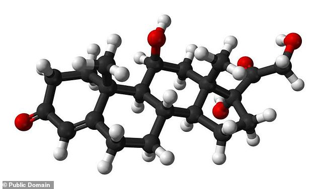 Manufactured by our adrenal glands from cholesterol, cortisol is a steroid hormone that performs various essential functions in the human body, including in regulating blood pressure, blood sugar levels and metabolism. Pictured, a molecular model of cortisol