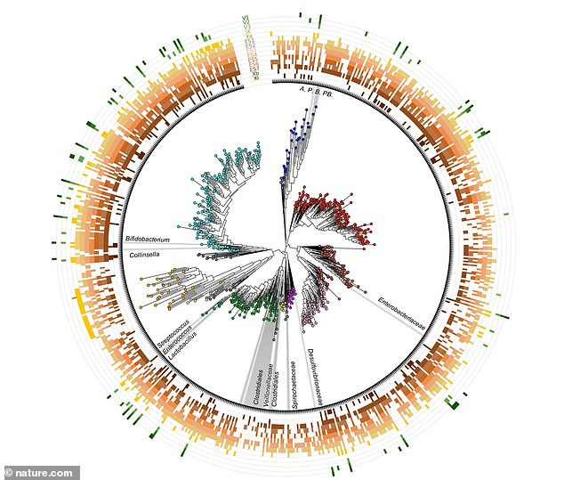 Researchers identified dozens of bacteria found in the gut of both species, which suggests these played a major role in the advancement of humans for tens of thousands of years – and maybe even longer