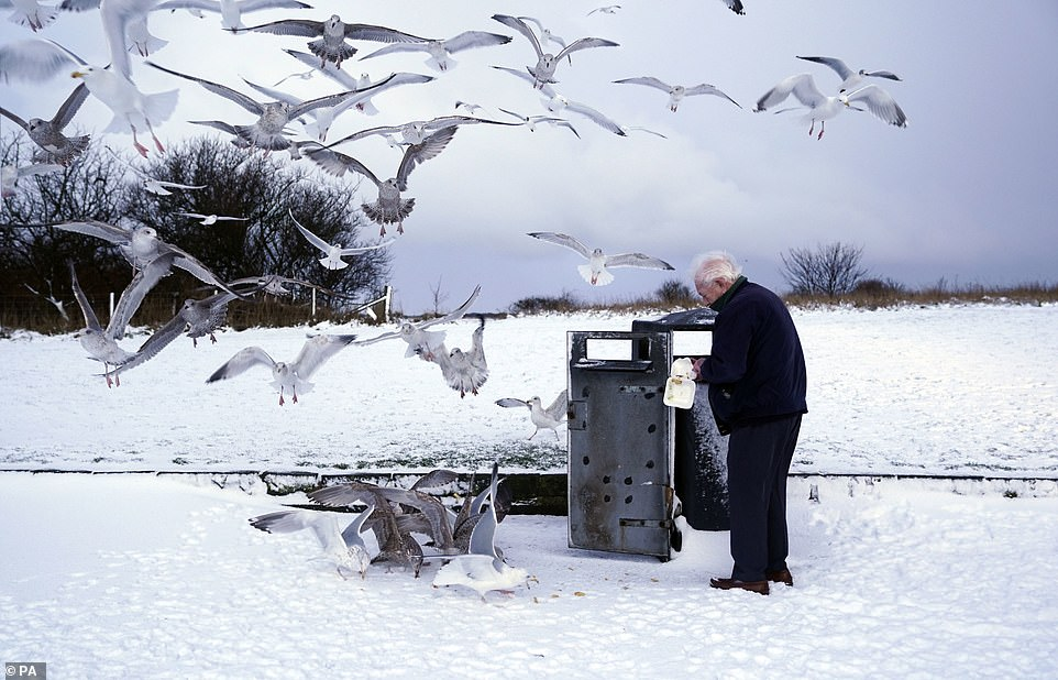 A man feeds seagulls in Whitley Bay.Temperatures could rise to 5C (41F) as far east as London by Sunday, and low single figures further north