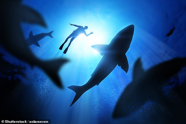 They found that, thanks to extensive tracking over nearly 40 years, the sharks preference hasn't actually changed, but the waters are becoming much warmer.
