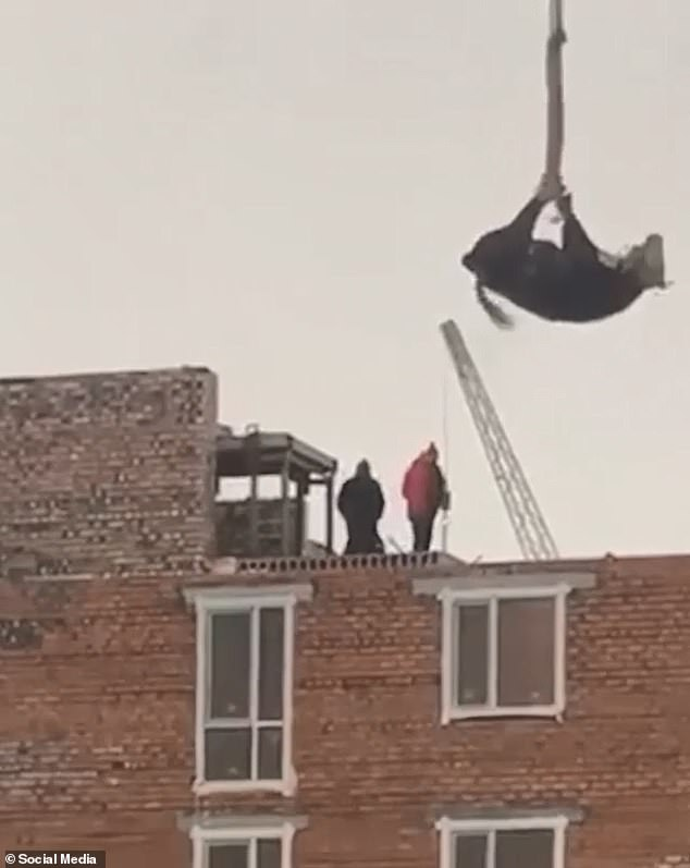 A video, filmed by witnesses, shows the last minutes of the doomed animal. The hog-tied cow is seen trying to break free while being hoisted up to the place of sacrifice