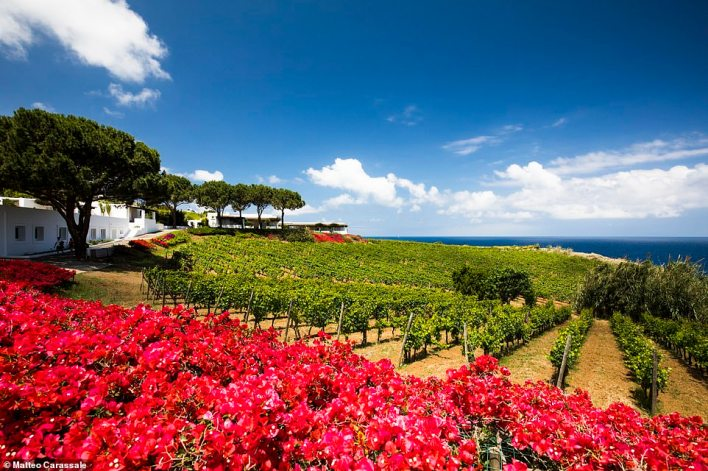 Highlights of the Wine & Catamaran Club cruise are two private vineyard visits with bespoke meals. One is to Tasca d'Almerita, on the island of Salina, pictured