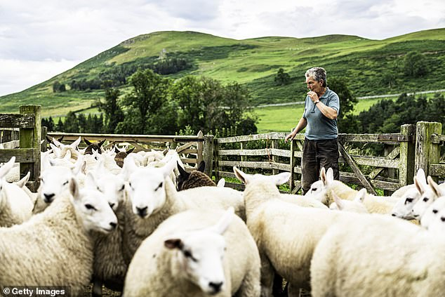 Tuck in: Undervalued British shares that are ripe for stock market investors include farming products supplier Wynnstay and the restaurant chain owner Various Eateries