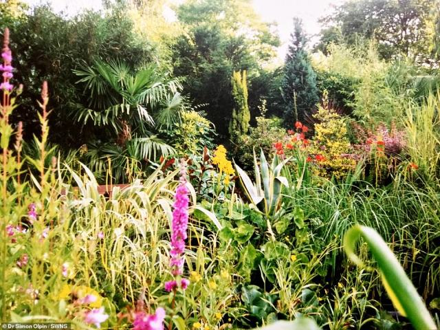 The Chinese windmill plant he bought now towers more than 100 feet over his house. Pictured: The lower garden in 1991