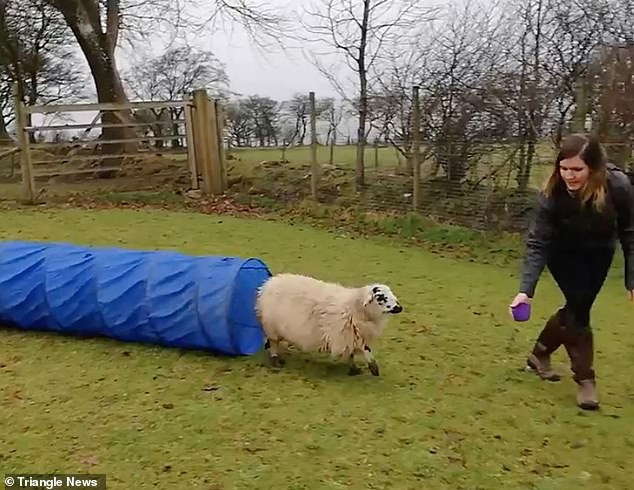 Becky has since recorded a clip of Luna launching herself over jumps, darting through tunnels and walking up planks