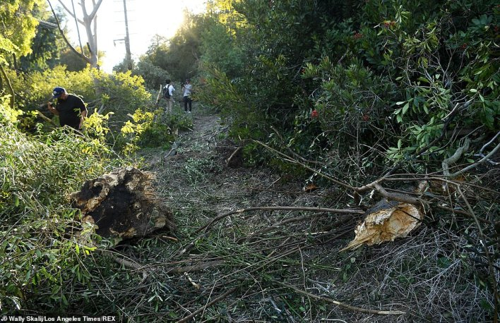 Woods' vehicle ploughed through the undergrowth, smashing into a tree and demolishing the bushes as it flipped