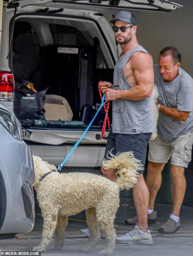 Puppy Power: Chris Hemsworth (pictured) and his wife Elsa Pataky flew to Sydney this weekend by private jet - and they took their dogs with them