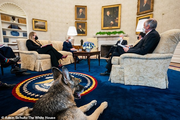 The dogs often feature in the background of Oval Office photos. Champ is pictured here during a meeting with senior advisers