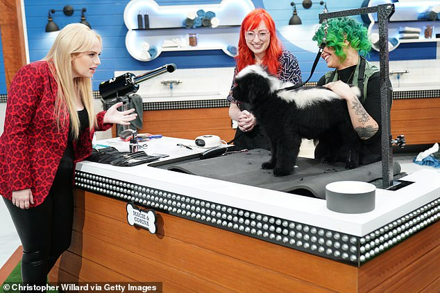 Seven Network reboot: Wilsonhas been hard at work hosting the eight-episode dog-grooming competition Pooch Perfect, which premieres March 30 on ABC