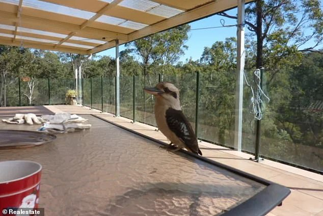 Several cringe worthy images of kookaburras have failed to sell a $1.58million home at Blaxlands Ridge, in the Hawkesbury region in Sydney's outer north-west. The five-bedroom house with three bathrooms and 11 car spaces has been on the market for 432 days